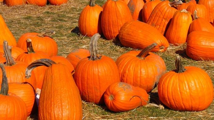 Halloween Kupa programok