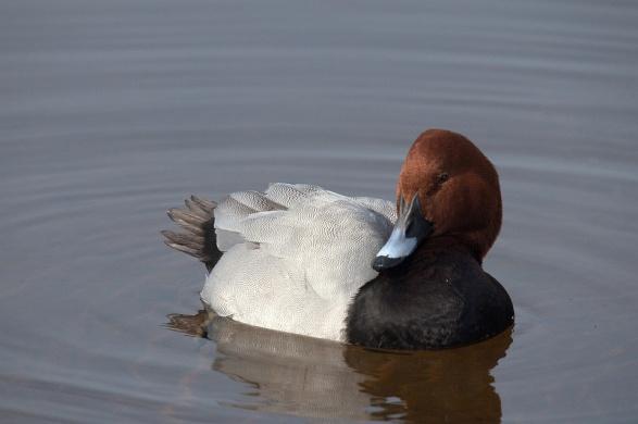 Vizes élőhelyek madarai, látogatás és ismerkedés a madarakkal a Körösvölgyi Állatparkban