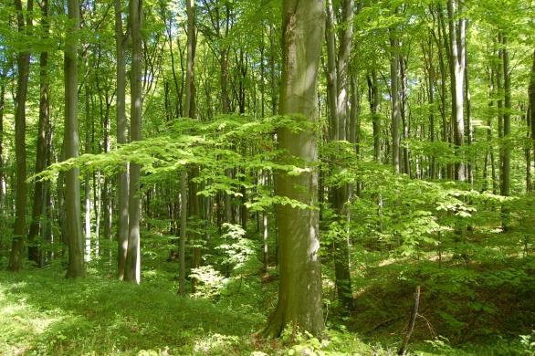 SEFAG Erdészeti és Faipari Zártkörűen Működő Részvénytársaság