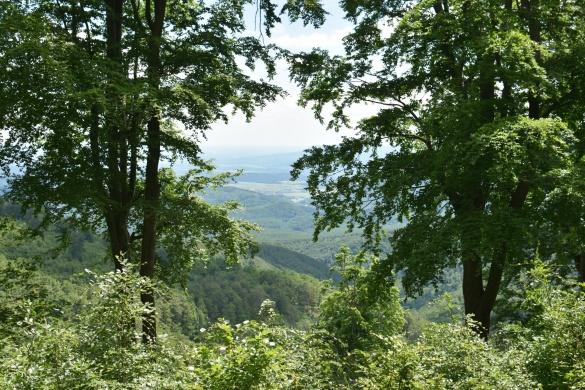 Túrák a Börzsönyben, a Duna-Ipoly Nemzeti Park szervezésében 2021