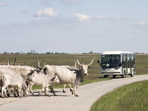 Puszta járat Hortobágy 2021. Túrázzon elektromos kisbuszokkal a Hortobágy látnivalói között!