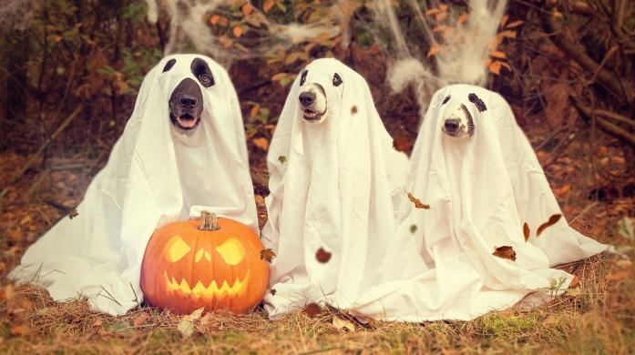 Halloween cukorka gyűjtés 2021. Jelmezes cukorkagyűjtés Budapesten